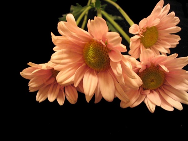 most-beautiful-flowers-40-photos- (35)