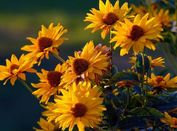 most-beautiful-flowers-40-photos- (38)