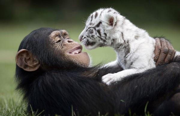 unusual-animal-friendship- (1)