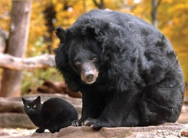 unusual-animal-friendship- (21)