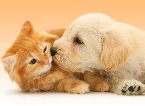 unusual-animal-friendship- (24)