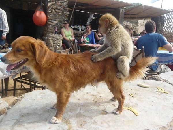 unusual-animal-friendship- (27)