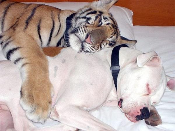 unusual-animal-friendship- (3)