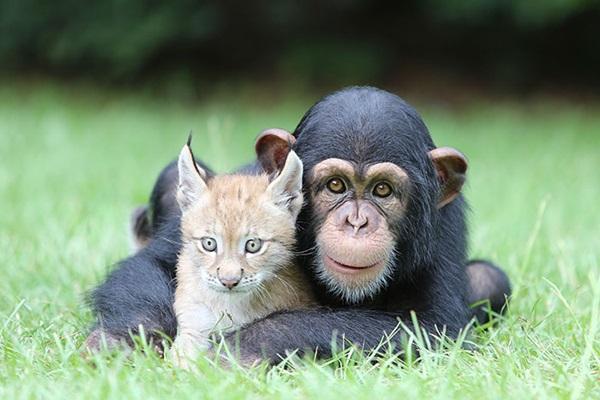 unusual-animal-friendship- (31)