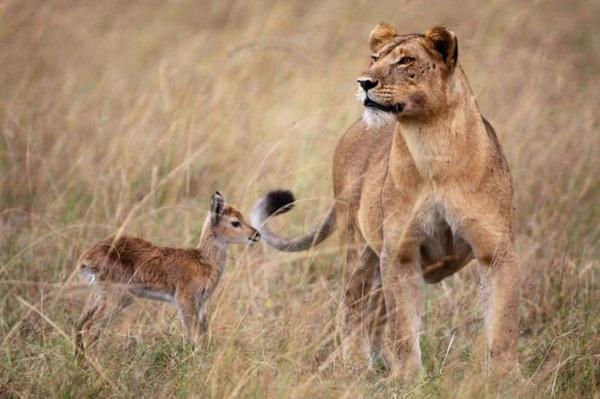 unusual-animal-friendship- (5)