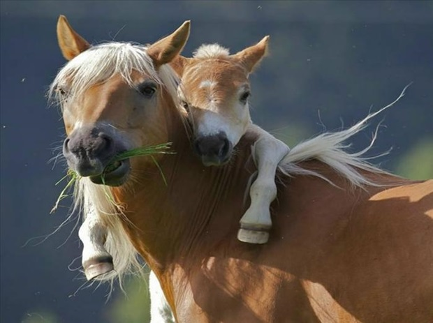pictures-of-cute-baby-animals-with-mom- (2)