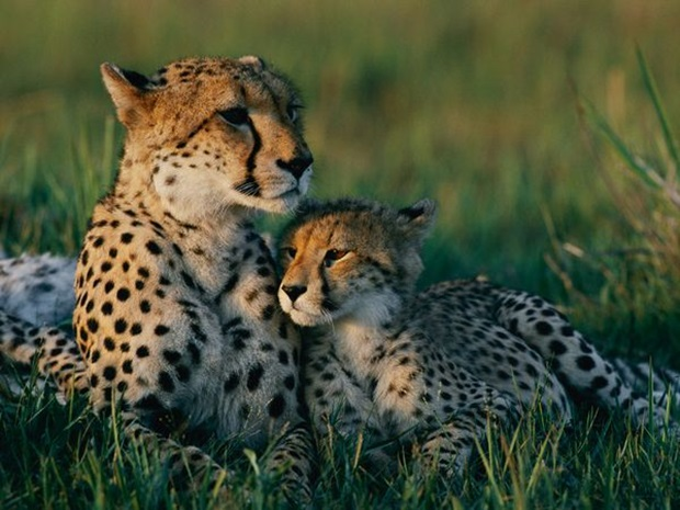 pictures-of-cute-baby-animals-with-mom- (8)