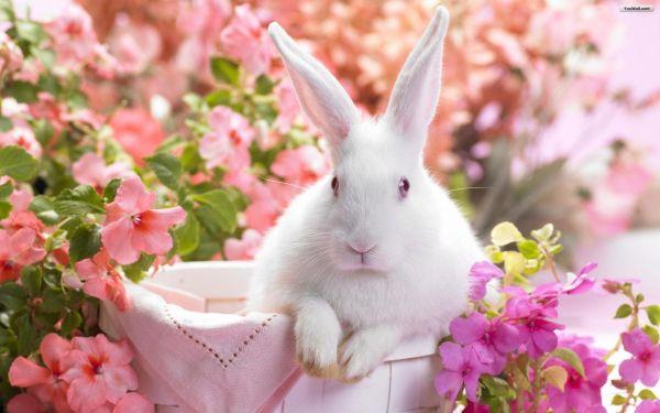 bunny-photos- (1)