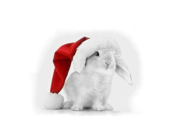 bunny-photos- (5)