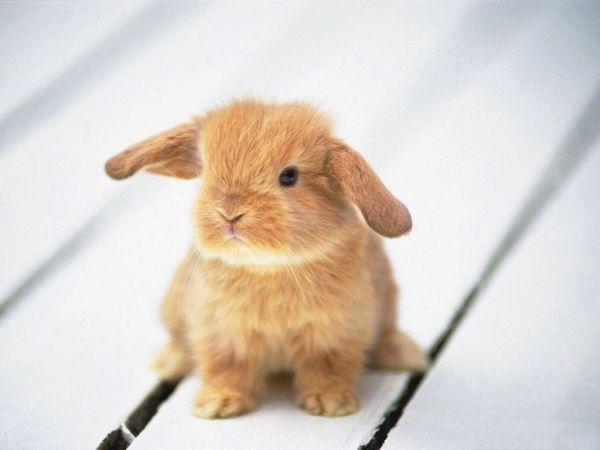 bunny-photos- (7)