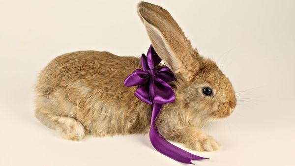 bunny-photos- (8)