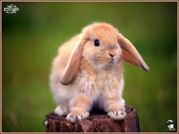 rabbit-pictures- (8)