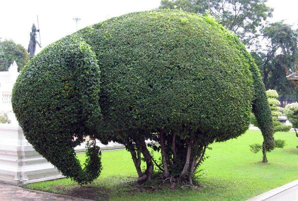 topiary-art- (1)
