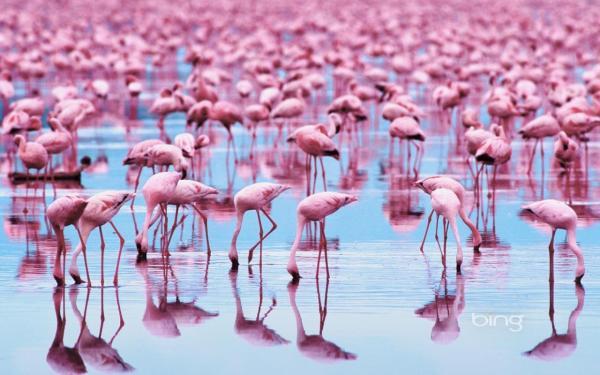 beautiful-birds-pictures-10-wallpaper- (10)