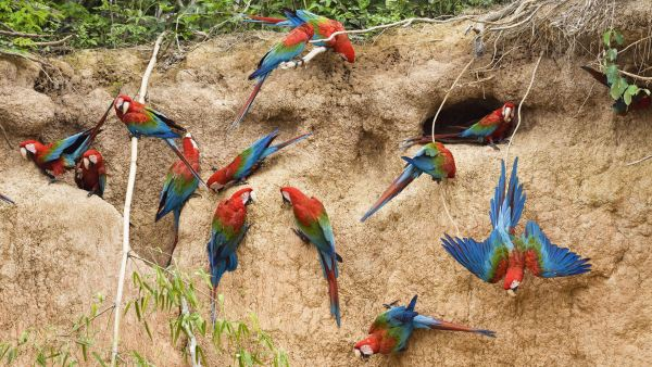beautiful-birds-pictures-10-wallpaper- (3)