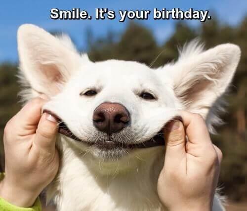 Birthday Quotes And Jokes