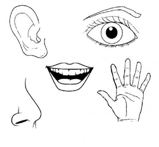 preschool five sense worksheets (2) « funnycrafts
