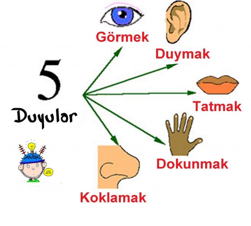 Preschool Five Sense Worksheets 3 Funnycrafts