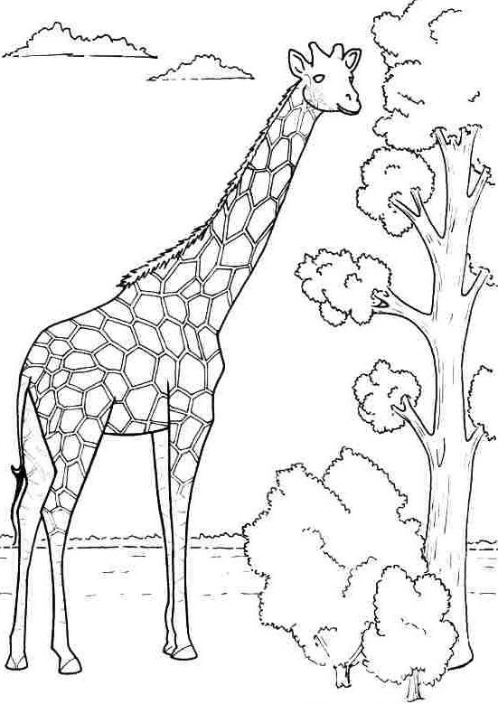 kids-giraffe-coloring-3 « Preschool and Homeschool