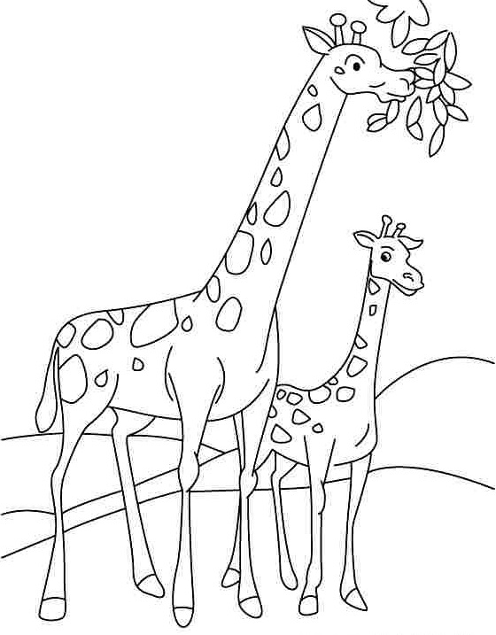 preschool-giraffe-coloring-pages-1 « funnycrafts