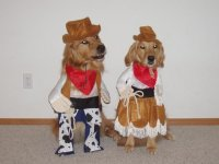 Cowboy Canines