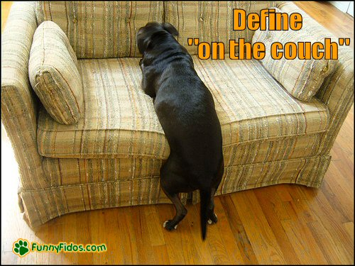 """Define """"on The Couch"""""""