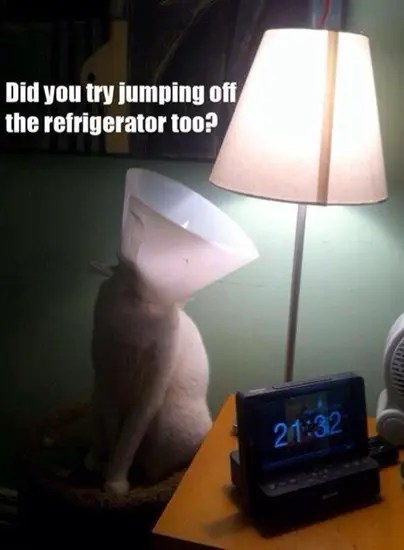 Did you try jumping off the refrigerator too?