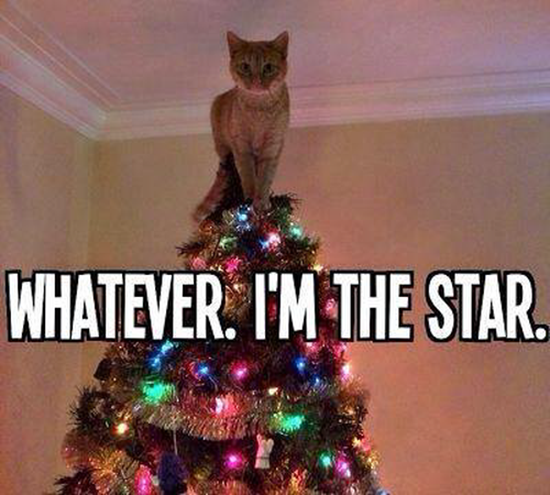 Whatever, I'm the star