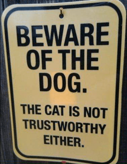 Beware of the dog–keep you eye on the cat