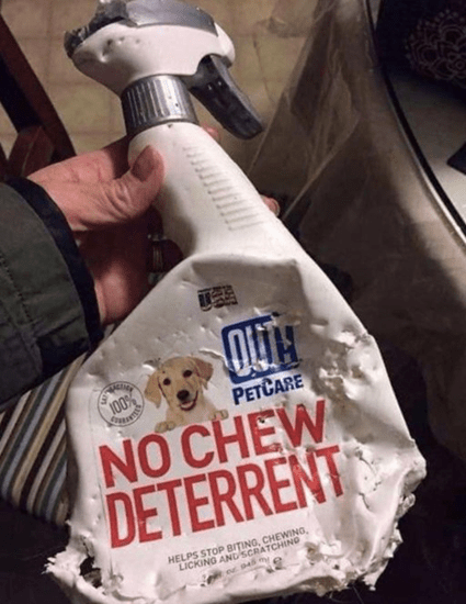 Dog chews up no chew deterrent