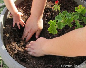 little hands in planters