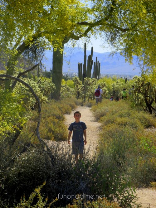 desert hiking - your own backyard