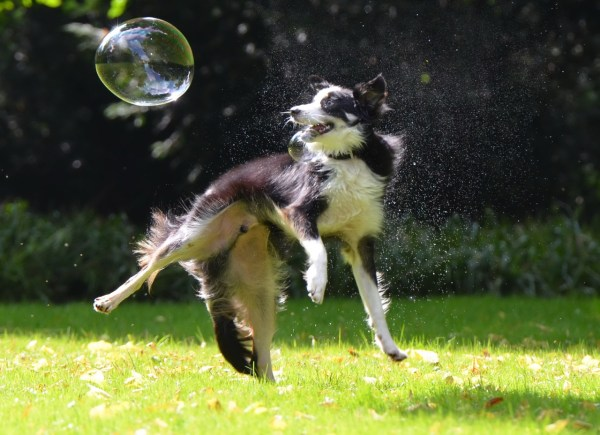 Dogs love chasing bubbles