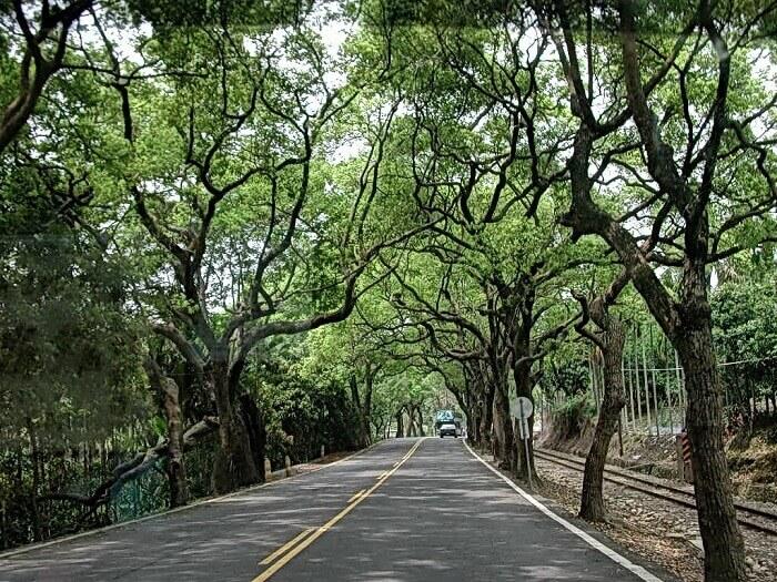 南投集集綠色隧道