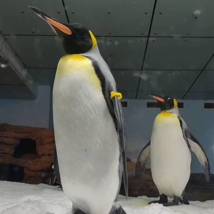 企鵝奇遇記