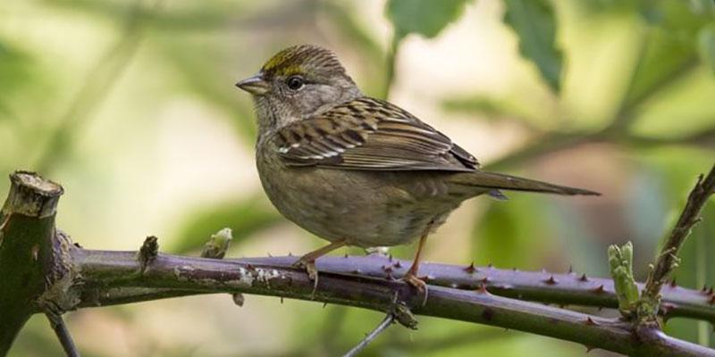 De Envenenamento A Desorientação Durante O Voo, Como Os Agrotóxicos Afetam Pássaros E Abelhas