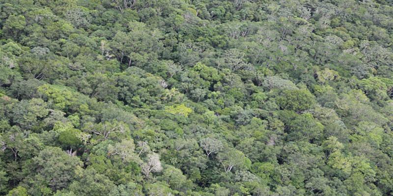 Floresta Amazônica Reduz Capacidade De Absorção De Carbono Chegando à Quase Zero