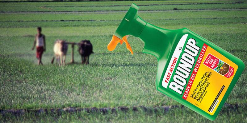 Relatores Da ONU Elogiam Decisão Judicial Nos EUA Contra Monsanto