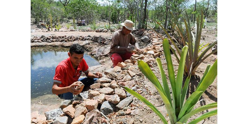 Aquecimento Eleva Risco De Desertificação No Nordeste