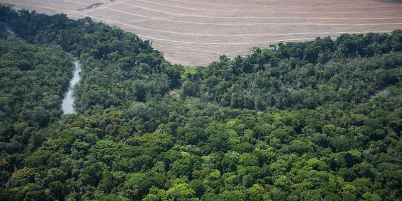 Cerrado Tem 98% De Desmate Ilegal Em Mato Grosso