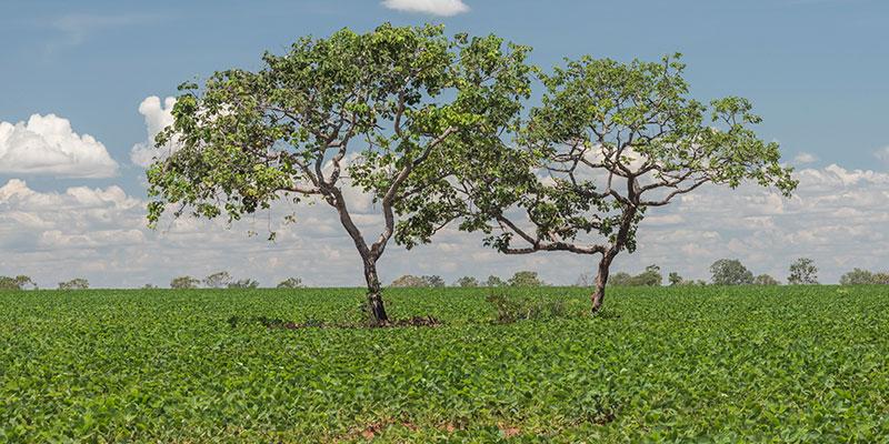 Precisamos Manter A Vegetação Nativa Do Cerrado
