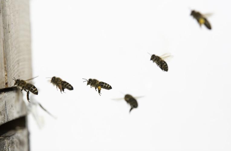 500 Milhões De Abelhas Morreram No Sul E Sudeste Do Brasil No Começo De 2019