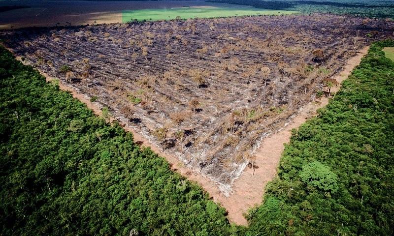 Na última Década, Desmatamento Na Amazônia Chegou A 62 Mil Km2, O Equivalente A 8,4 Milhões De Campos De Futebol