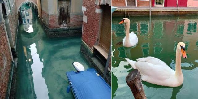 O Efeito Do Corona Vírus – Canais De Veneza Estão Ficando Limpos Com A Falta De Turistas