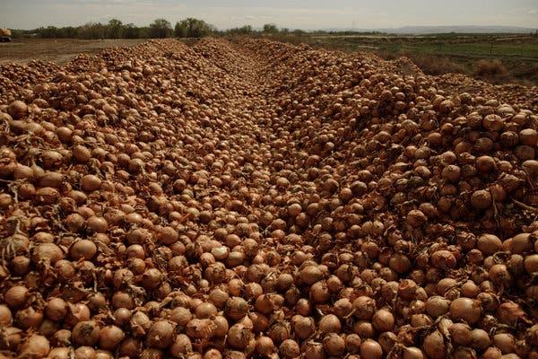 Desperdício De Alimentos Durante A Pandemia Nos Estados Unidos