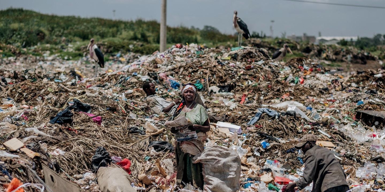 Plástico Agora Em órgãos Do Corpo Humanos