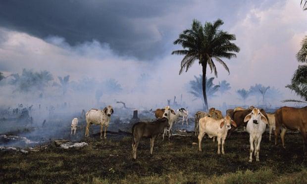 A Humanidade E A Destruição Da Vida Animal