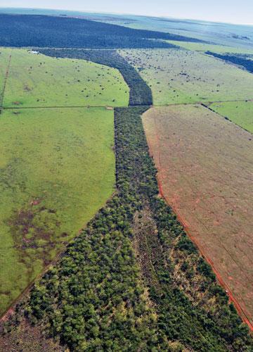 O Que São Corredores Ecológicos