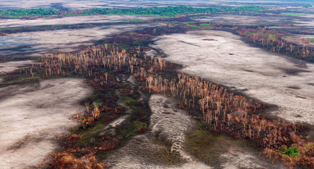 Como O Desmatamento Da Amazônia Pode Afetar Nossa Saúde?
