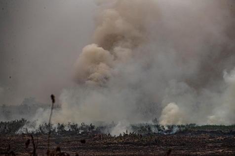 Queimadas Destruíram 14% Do Pantanal Em Setembro, Diz Inpe